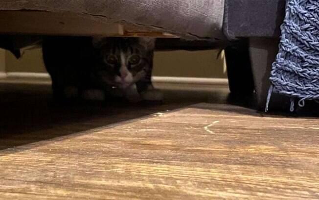Mulher compra sofá usada e encontra um gato