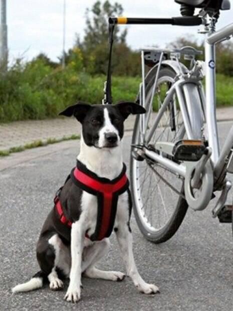 Andar de bicicleta com o cão exige obediência por parte do animal