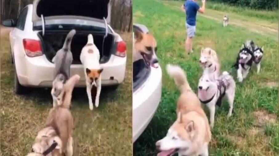 Nove cães passeando em um porta-malas
