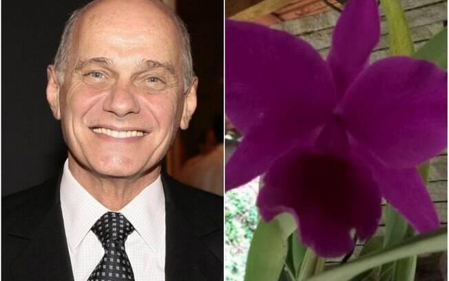 Ricardo Boechat é homenageado por criador de Orquídeas, e história comove as redes sociais