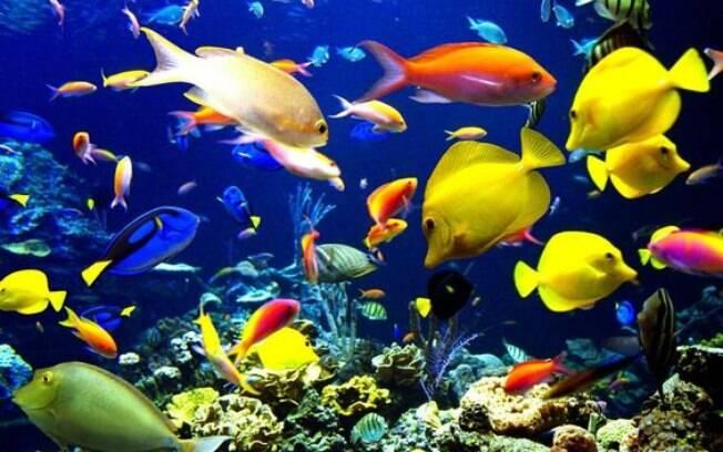 Escolha os peixes com sabedoria, pois algumas espécies são difíceis de cuidar e pouco recomendadas para iniciantes