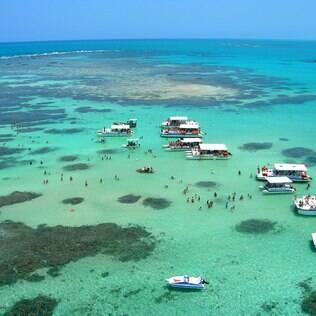 Os nativos de peixes, por exemplo, gostam de praias tranquilas como as de Maragogi