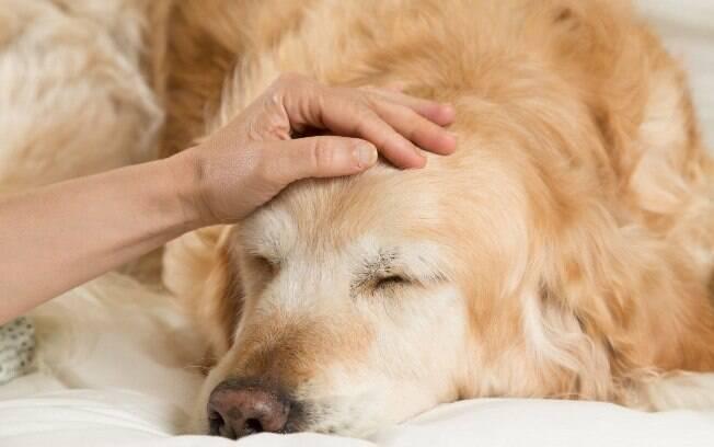 Se seu peludo for mesmo diagnosticado com Alzheimer canino, saiba que você deve estar preparado para lidar com essa condição