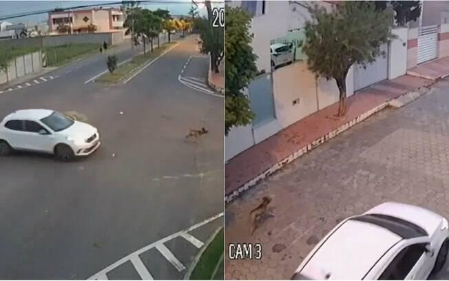 Cão foi perseguido e morto por pessoa ainda não identificada em carro