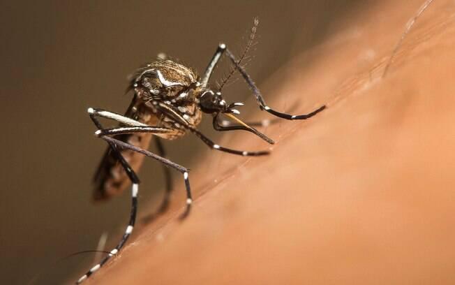 LIRAa mostrou que 22% das cidades brasileiras podem ter surto de dengue, zika e chikungunya