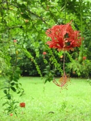 Jardim Botânico do Rio de Janeiro é garantia de um bom passeio