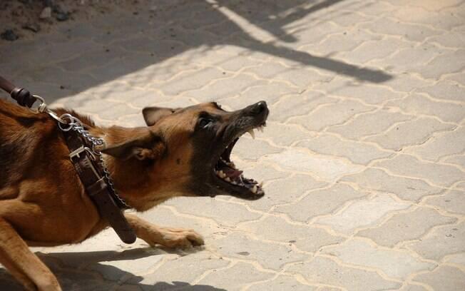 Um dos sintomas da raiva canina é a agressividade