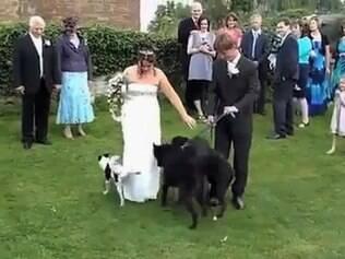Mico no casamento: cachorro faz xixi no vestido da noiva