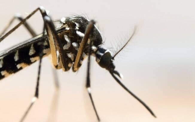 De acordo com a presidente da Fiocruz, combate ao Aedes aegypti pode ser o maior desafio enfrentado hoje pela saúde