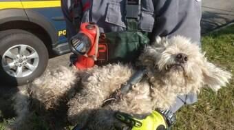 Cachorro que foi abandonado em rodovia é adotado em São Paulo