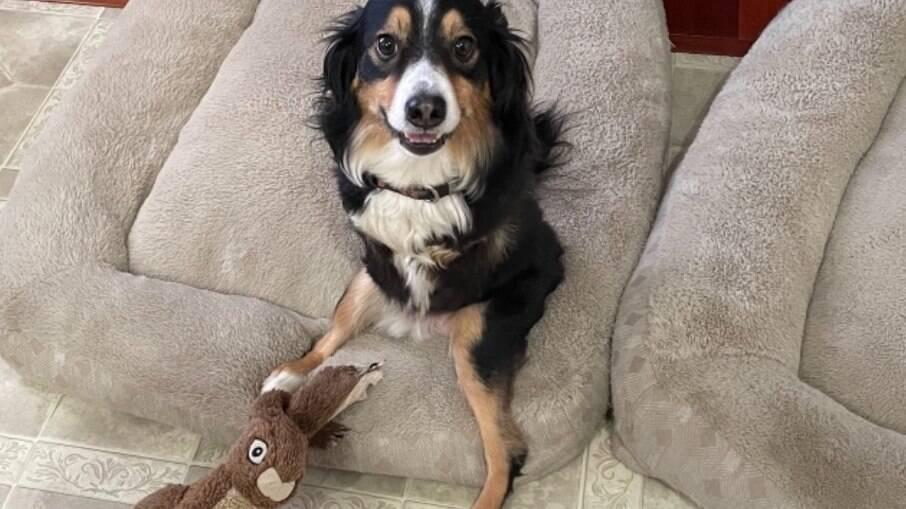 Tobi sentado olhando para a câmera com seu coelho de pelúcia