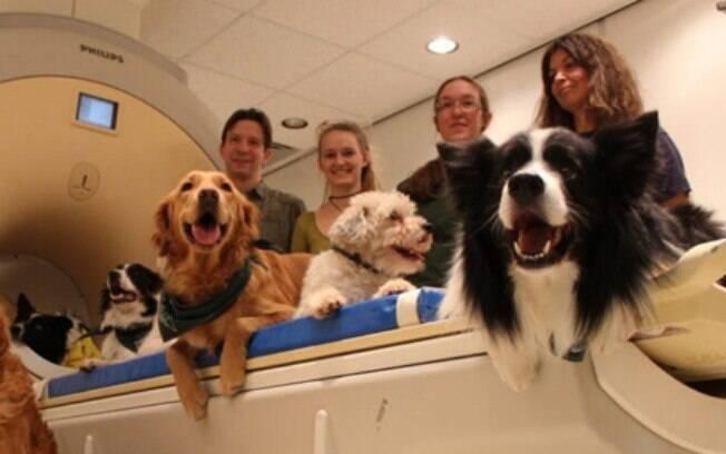 A capacidade dos cães de reconhecer vozes e entonações foi comprovado