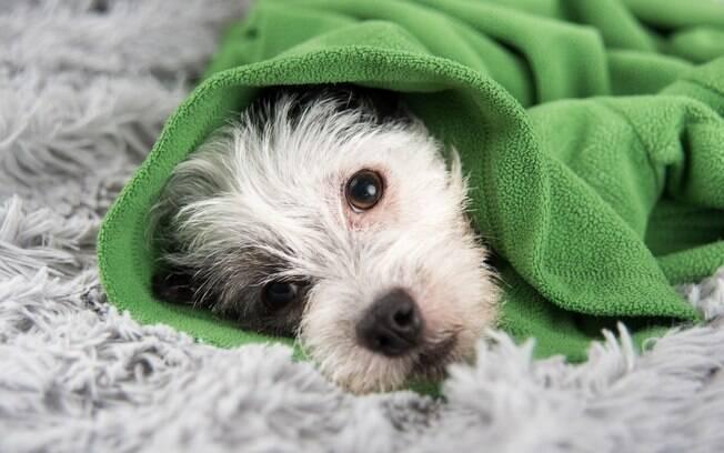 O cachorro está com gases intestinais, e agora?