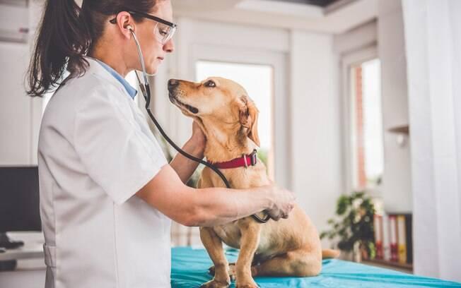 O diagnóstico da cistite em cães deve ser feito por um veterinário de confiança