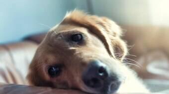 Isolamento social estendido exige cuidados com a saúde do seu pet