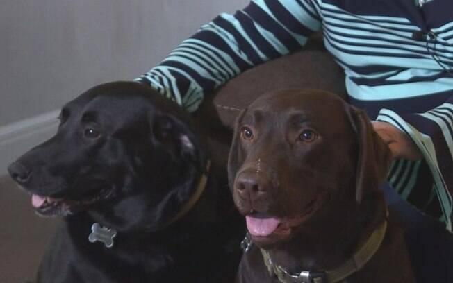 As Labradores fêmeas que salvaram sua dona Maureen, Bella e Sadie.