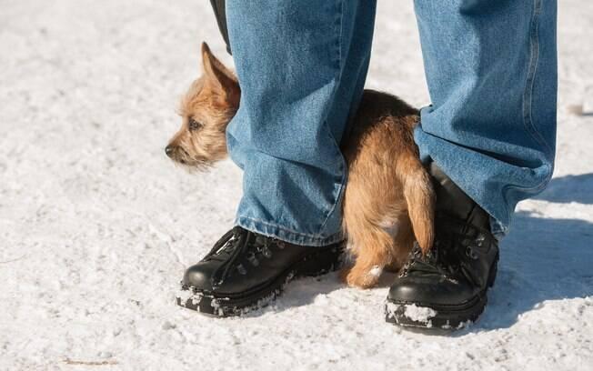 Um animal retraído é um sinal de alerta, pois isso pode acabar virando uma depressão. Dessa forma, os donos precisam ajudá-lo a se tornar um cão autoconfiante