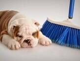 Cheiro de cachorro é difícil de lidar, mas pode melhorar