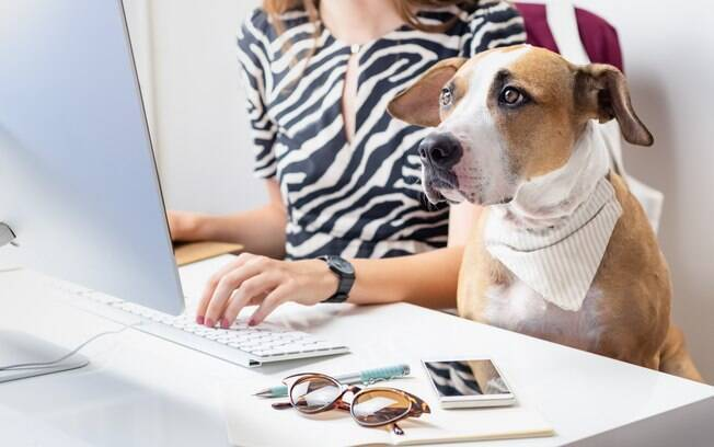 Poder levar o pet para o trabalho é algo cada vez mais comum