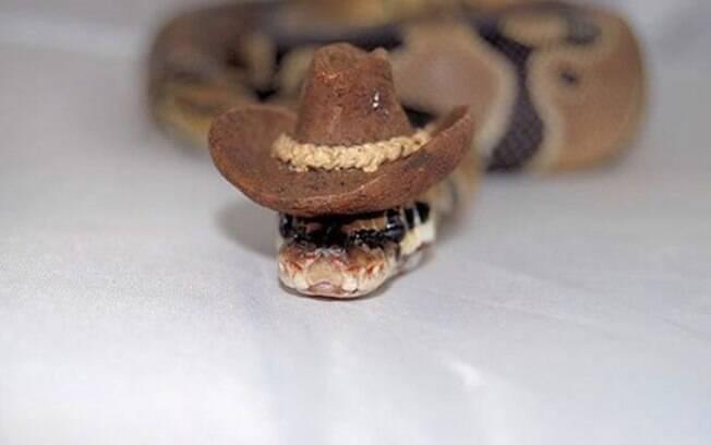 Cobra com chapéu de cowboy