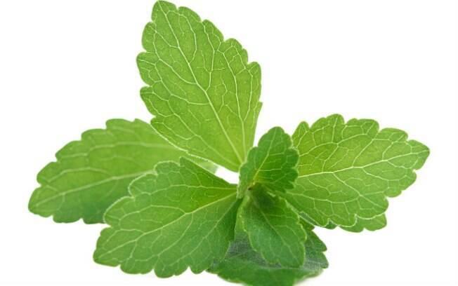 A Stevia, mesma planta usada para fazer o adoçante, auxilia na contracepção por afinar as paredes do endométrio