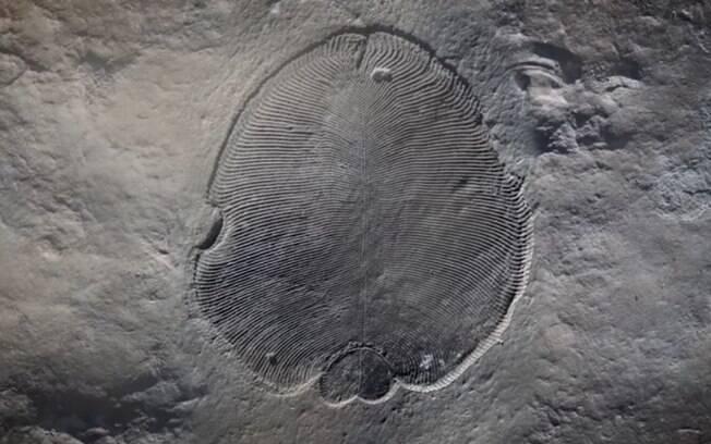 Análises do fóssil comprovarem que animais desse tipo existiram pelo menos 20 mi de anos antes da explosão cambriana