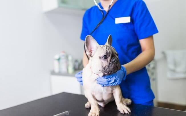 O cachorro vomitando espuma precisará ser examinado por um veterinário
