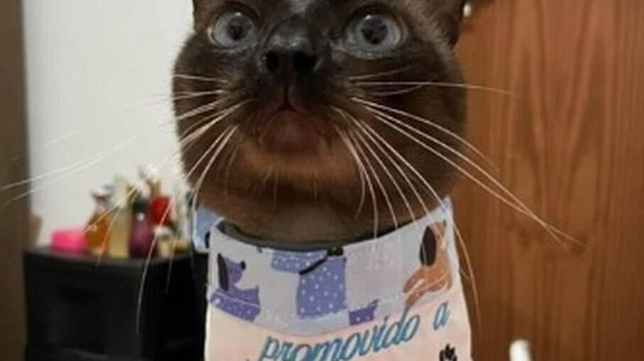 Suposto sequestro de gato viraliza nas redes sociais