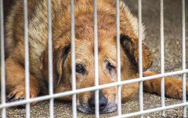 Delegacia Eletrônica de Proteção Animal recebe denúncias de maus-tratos