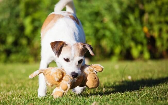 Brinquedos de pelúcia podem desfiar a costura e o pet pode engolir os fios, alerta veterinária
