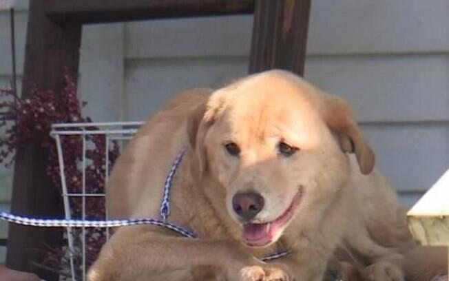 Cadela desaparece e é encontrada em antiga casa em outra cidade