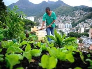 Hortas comunitárias são ótimas opções para comunidades carentes