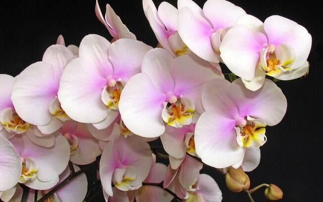 Organizado, o nativo de virgem não se esquecerá de nenhum detalhe para cuidar bem das orquídeas