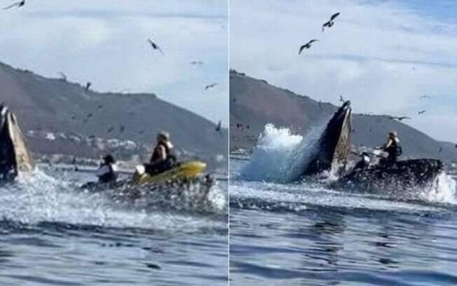 Julie McSorley e Liz Cottriel foram engolidas por uma baleia