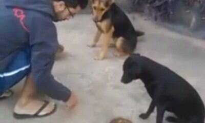 """Cães """"rezam"""" junto ao dono antes de comer e viram hit"""