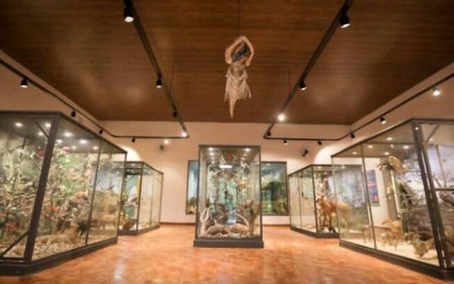 Aps reforma, Museu de Histria Natural, no Bosque, ser reaberto em janeiro