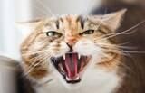 Você tem um gato agressivo? Saiba o motivo do problema e como tratá-lo