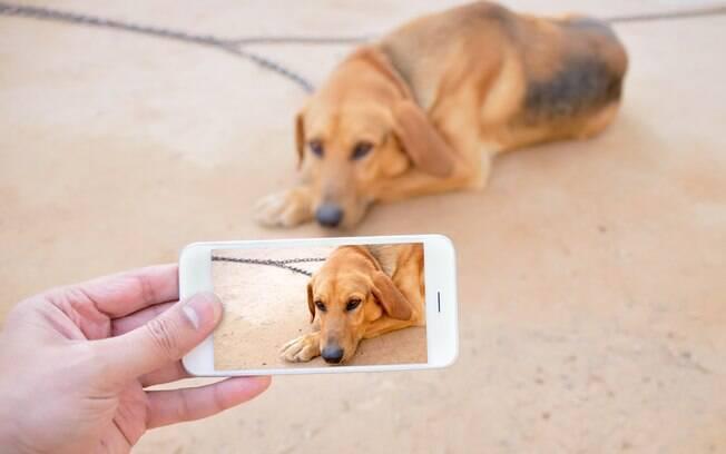 Estudo mostra que animais resgatados que não saem bem em fotos têm menos chances de serem adotados