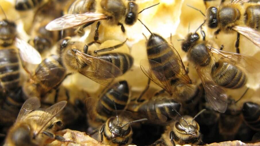 Homem morre após ser atacado por 'centenas de abelhas'