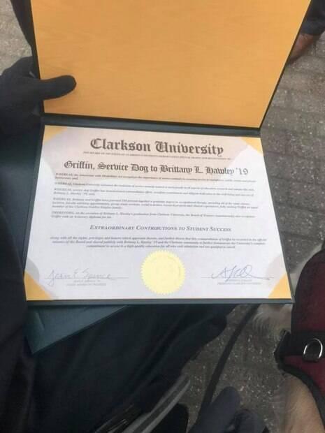 Cão-guia ganha diploma de universidade por acompanhar sua dona em todas as aulas