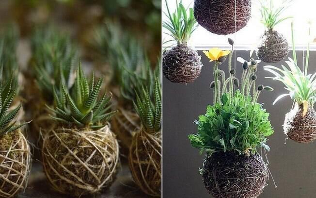 Segundo a bióloga, plantas cuja ingestão é perigosa devem ficar suspensas em arranjos como estas kokedamas