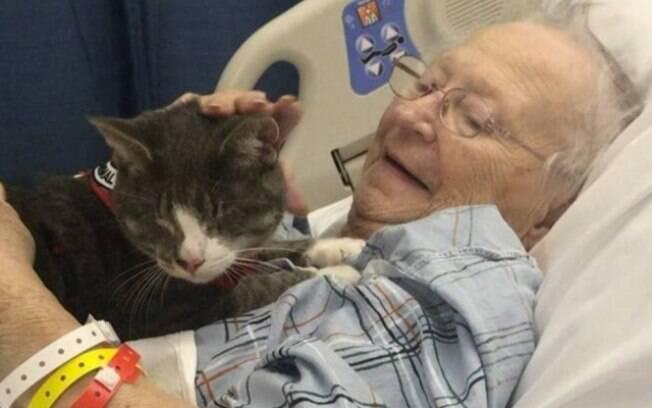Gato cego ajuda sua dona a suportar tratamento contra o câncer