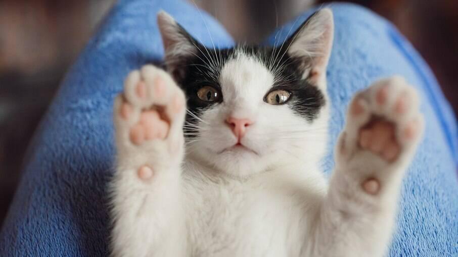 Gatos preto e branco costumam receber o nome de Frajola