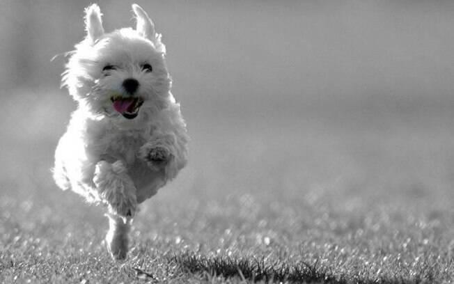 Cachorro perdido porque fugiu da coleira? Siga algumas dicas e saiba como pegá-lo de volta
