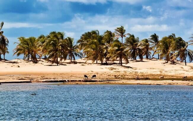 Se você quer saber o que fazer em Alagoas, passar pela foz do Rio São Francisco é indispensável para um roteiro completo