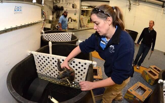 Funcionários cumpriram lista de verificação que incluía a preparação de habitats de animais para furacão Florence