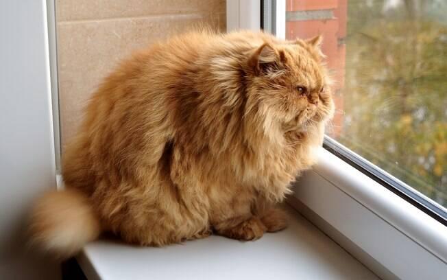 O sobrepeso é um dos principais motivos para a diabetes em gatos aparecer tão cedo