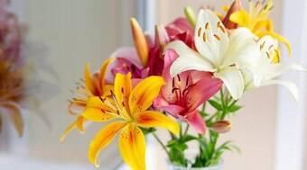 A vibração das flores complementam energia dos signos; conheça