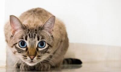 Gatos também usam seus olhos para comunicar como se sentem