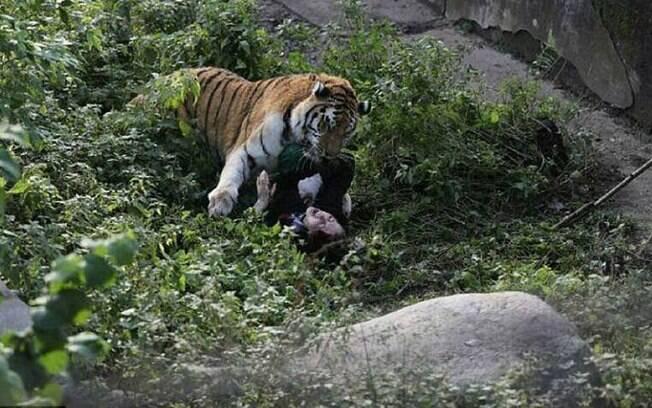 Tigre ataca tratadora em zoológico na Rússia